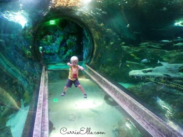 tunnel through aquarium at SeaLife Aquarium