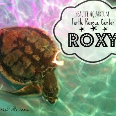 Visit the Turtle Rescue Center at Sea Life Aquarium