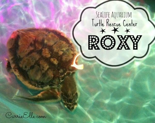 Roxy, turtle at Turtle Rescue Center at SeaLife Aquarium