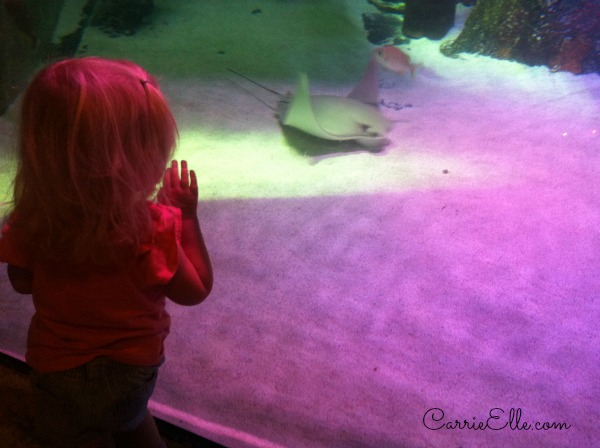 toddler watching stingray