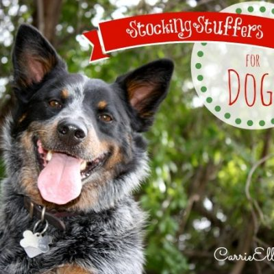 Stocking Stuffers for Dogs from Walgreens Pet Shoppe