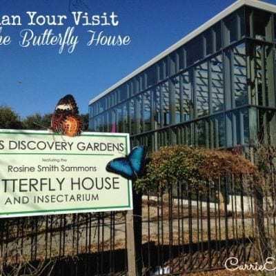 Plan Your Visit to the Texas Discovery Gardens and Butterfly House