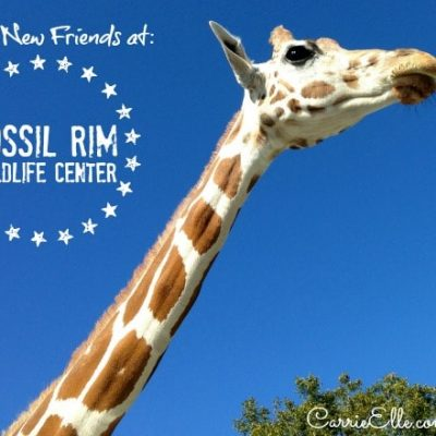 Make Friends with the Wildlife at Fossil Rim Wildlife Center in Glen Rose, TX