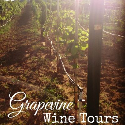 All About Grapevine Wine Tours (with a Coupon Code, Too!)