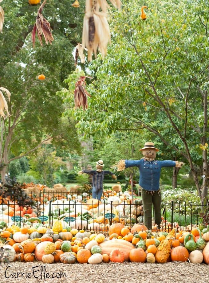 Arboretum Scarecrows
