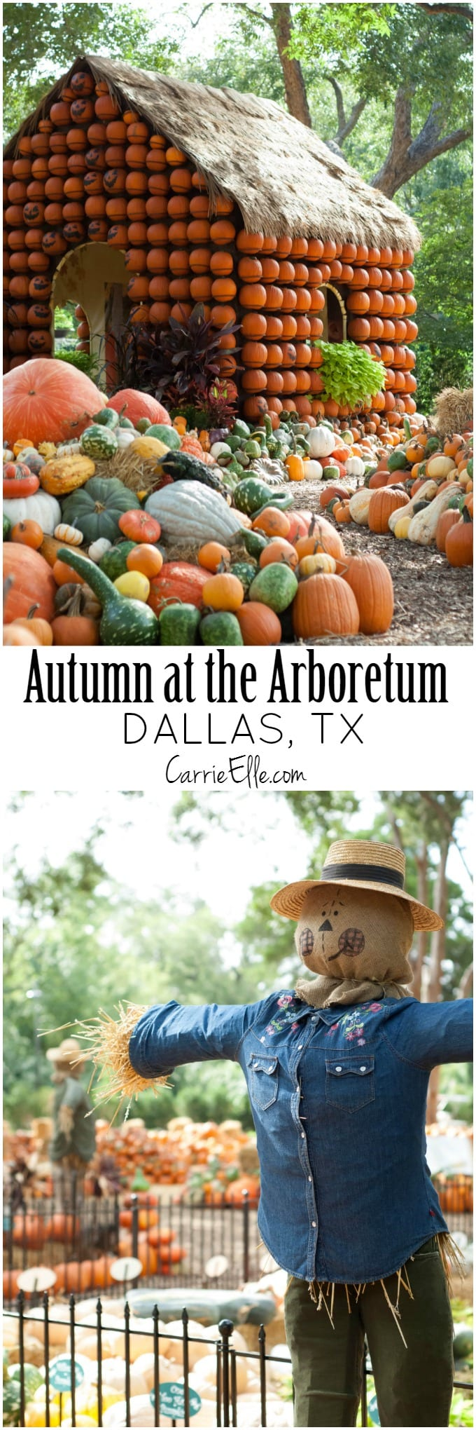 Autumn at the Arboretum Dallas