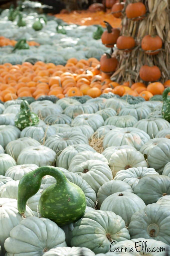Autumn at the Arboretum Gourds