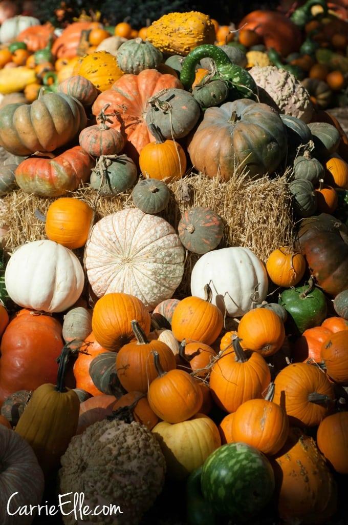 Autumn at the Arboretum Pumpkins