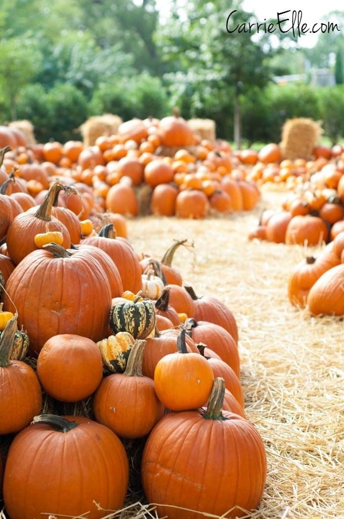Pumpkin Village Arboretum