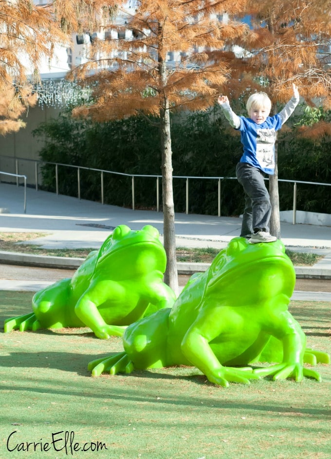 Frogs at Perot Museum