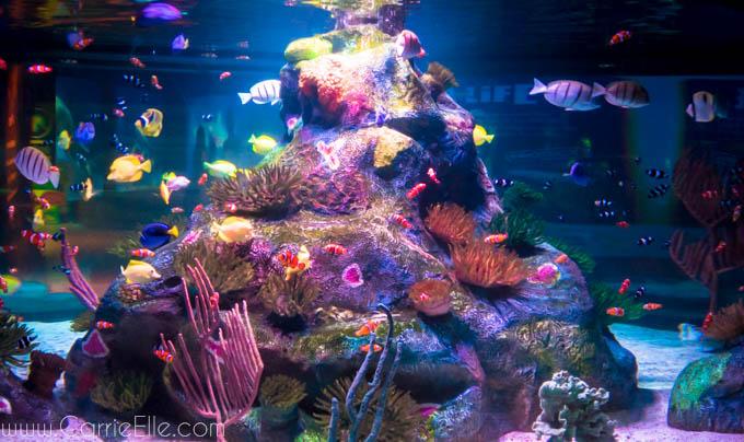 fish at sealife aquarium