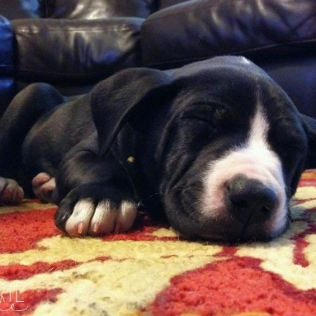 Snoopy the Puppy
