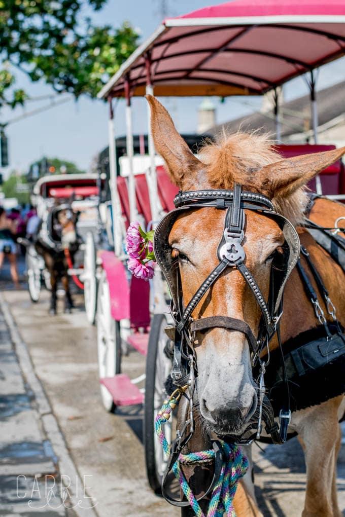 Mule Tour New Orleans