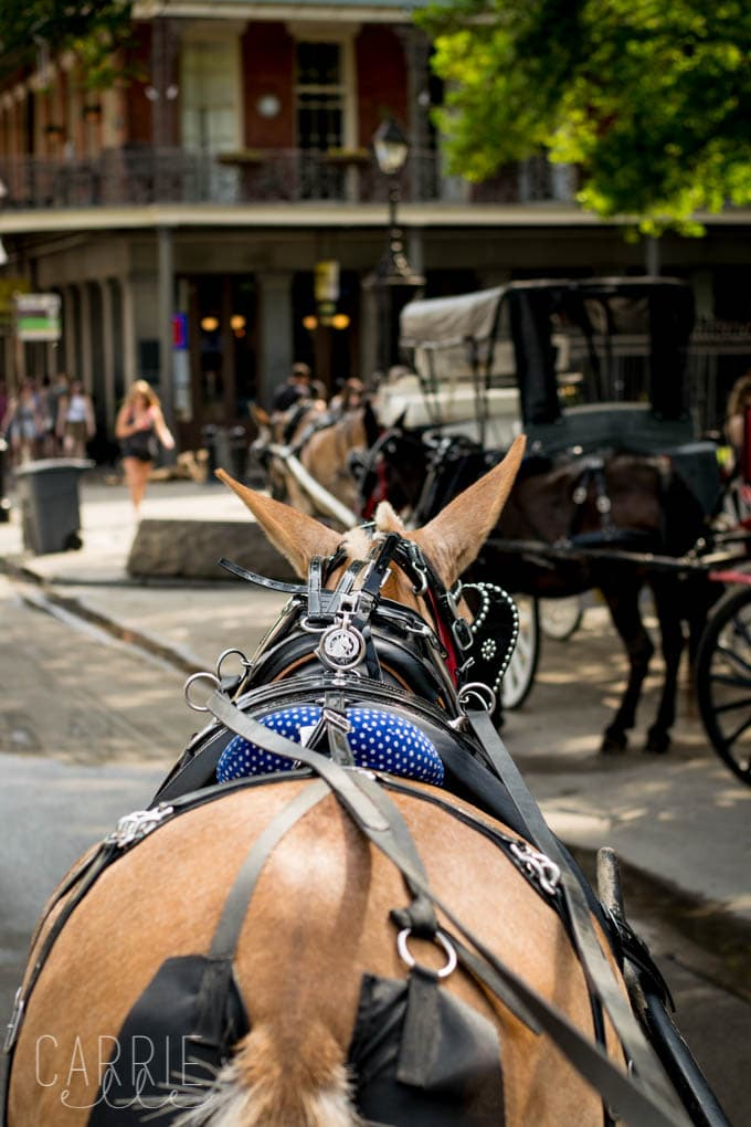New Orleans Mule Tours