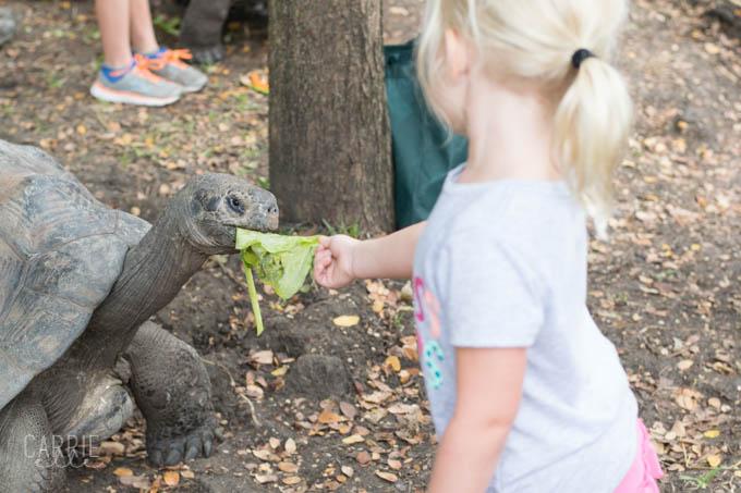 Galapagos Tortoise at Dallas Zoo