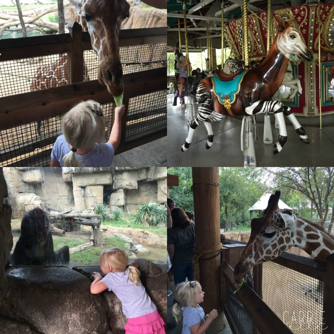 Dallas Zoo Fun