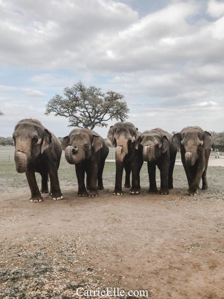 The Preserve Elephant Preserve Texas