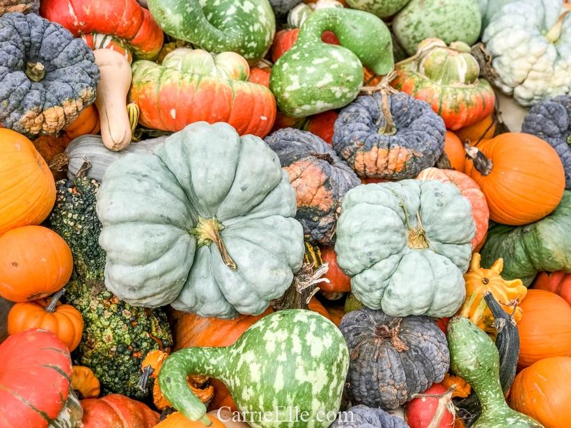 Pumpkin Village at the Dallas Arboretum