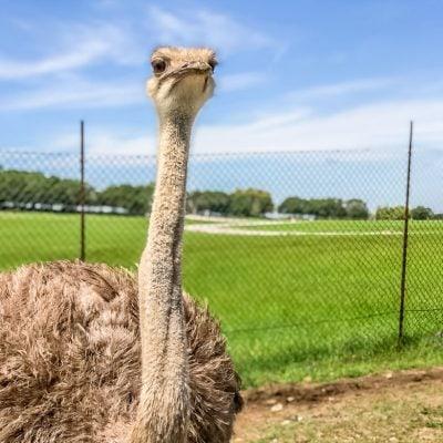 Plan Your Trip to Fossil Rim Wildlife Center in Glen Rose, TX